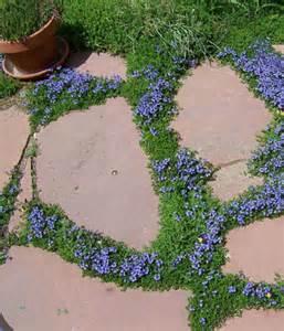 Exceptional How To Fertilize A Garden Part   9: Exceptional How To Fertilize A Garden Pictures Gallery