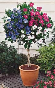 as garten de k 252 belpflanzenpflege pflanztipps ahrens sieberz