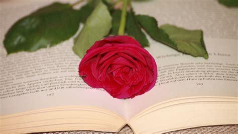 libro por una rosa antena 3 tv 191 por qu 233 se regala una rosa y un libro en el d 237 a de sant jordi