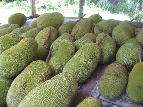 j fruit sci the of all fruits tropical trees and plants