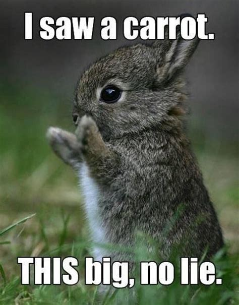 Cute Baby Animal Memes - 25 best ideas about cutest animals on pinterest cutest