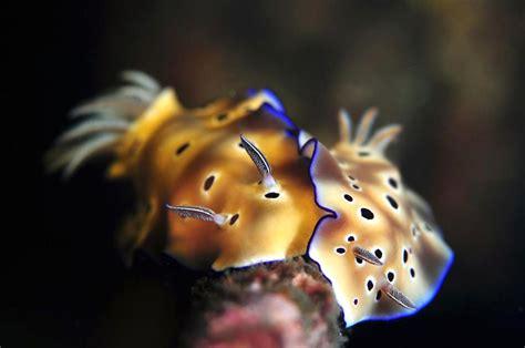 jesse chao fish pet underwater world novelty