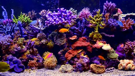 Benang Rajut Import Saver Coral the best 4k aquarium find make gfycat gifs