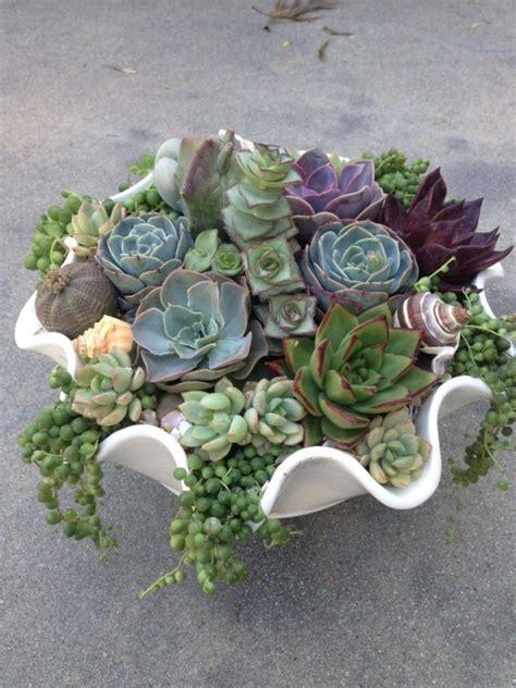 fascinating succulent plants designs    check