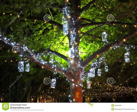 holiday lights vintage in tree at night stock photo image 36605260