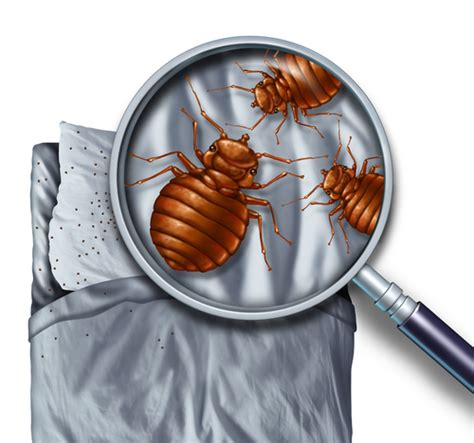 entreprise desinfection punaises lit 4351 entreprise traitement d 233 sinfection punaise de lit