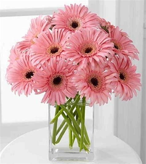 imagenes de gerberas blancas um jardim para cuidar as flores do meu pai