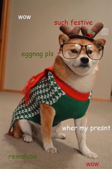 Christmas Doge Meme - image via dogs in christmas sweaters