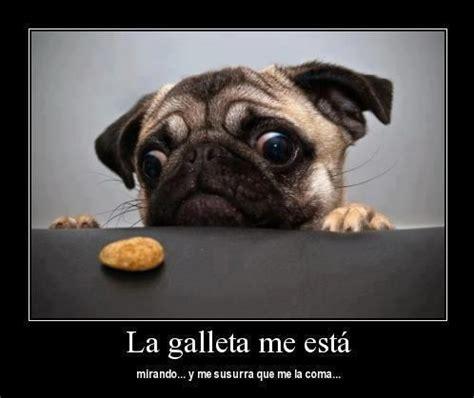 imagenes de amor chistosas con animales imagenes graciosas de perros con frases imagenes de perros