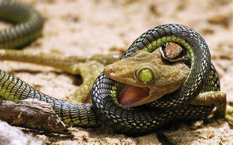 Garden Snake Eat Mice صور متنوعه تحميل صور مختلفة تحميل صور جميلة تحميل