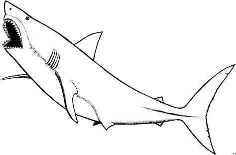 Hai Vorlagen hai mit offenem mund ausmalbild malvorlage tiere
