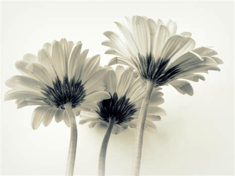 foto artistiche di fiori foto e immagini di fiori come sfruttarle al meglio per