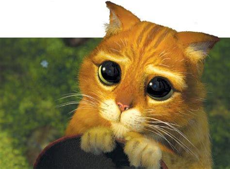 imagenes chidas moviendose imagenes de gatos moviendose imagui
