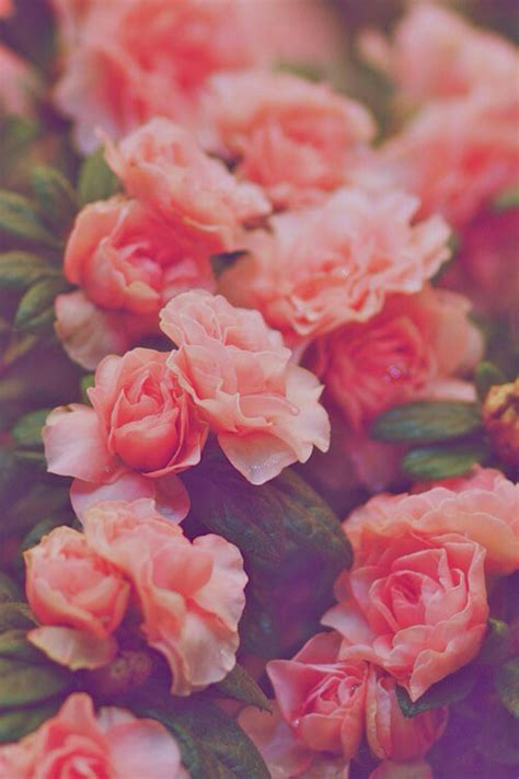 imagenes de amor con flores tumblr lost in the echo