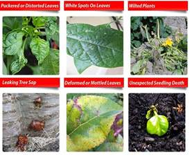 australian garden pests garden pests identification in australia pest guru