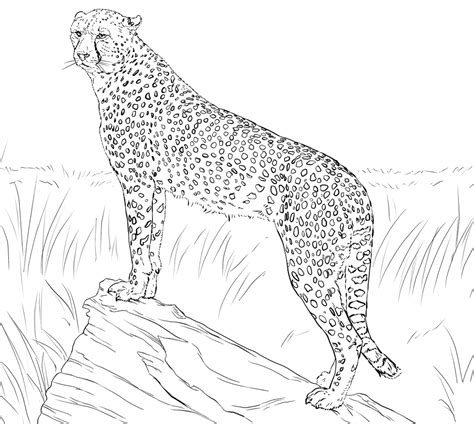 Coloring Page Cheetah by Cheetah Coloring Pages 360coloringpages
