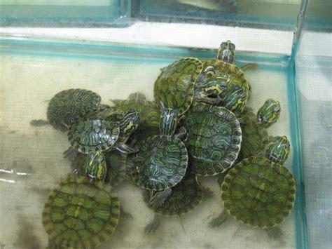 pet turtles eat pethelpful
