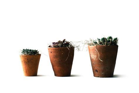 vasi per bonsai economici vasi terricci attrezzi vivaio scariot