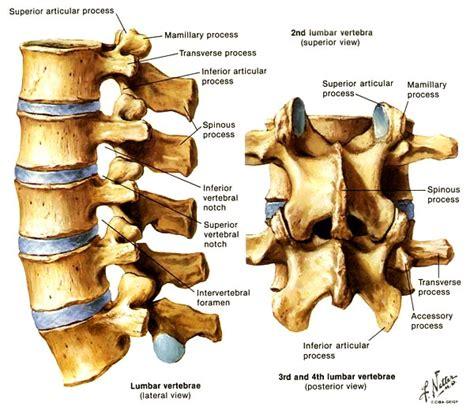 lumbar 4 and 5 diagram backswing