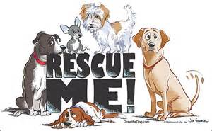 animal rescue home the s pets 7 signs of a reputable rescue