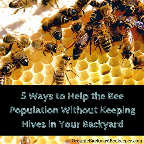 Raising Bees In Backyard 28 Images Backyard Beekeeping How To Raise Bees In Your Backyard