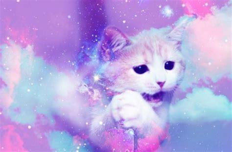 wallpaper tumblr cat pics for gt galaxy cat backgrounds tumblr