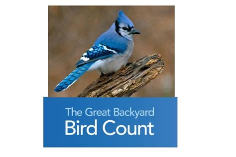 Great Backyard Bird Count Great Backyard Bird Countcentral Penn Parent