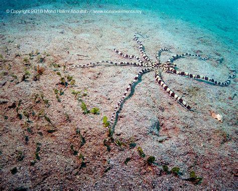batik air gorontalo gorontalo ocean elements dive centre perhentian island