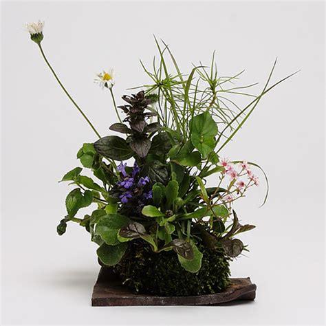 Garden Of Keto Kokedama Accents Magical Bonsai Accents