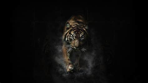 wallpaper black tiger hd 1920x1080 tiger wallpaper full hd 65 images
