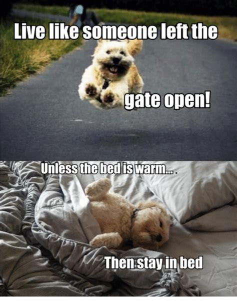 Sharing Bed Meme - 25 best memes about memes memes meme generator
