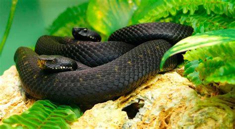 imagenes asombrosas de serpientes image gallery serpientes venenosas
