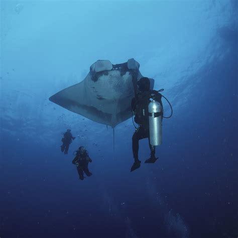 dive master padi divemaster silent world divers