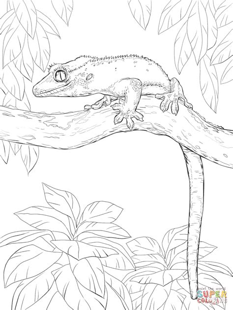 gecko lizard coloring pages crested gecko on a tree coloring page free printable
