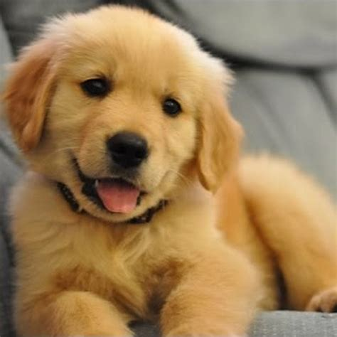 pictures of puppies dogs topic
