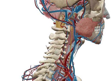 infiammazione testa nervo vago riconoscere i sintomi e trovare le cure