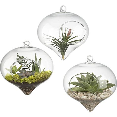 hanging glass terrarium cb2