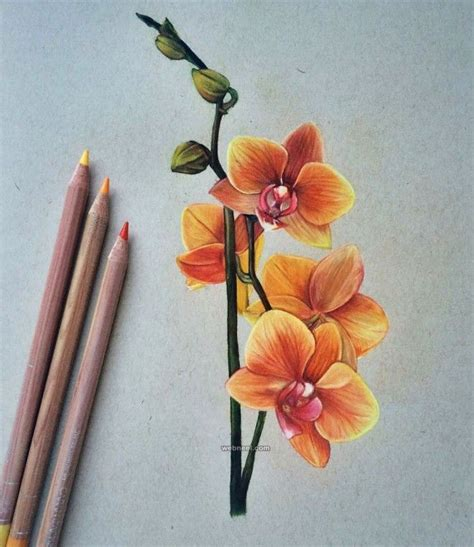 libro flowers in colored pencil best 25 3d pencil drawings ideas on