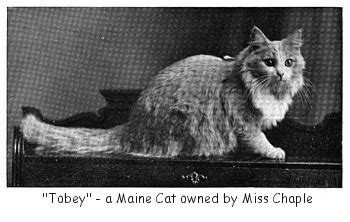 We Are The Cat Excerpt by The Way We Were Excerpts From The 1959 Cfa Yearbook Part 6