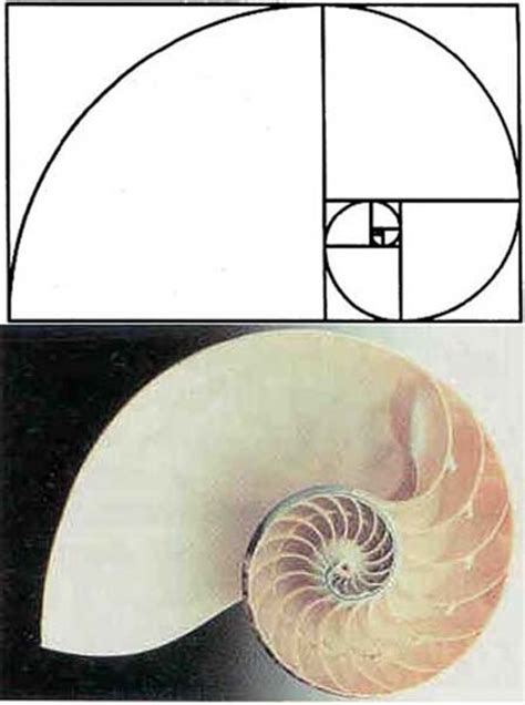 golden section in nature armed mind armada golden ratio 1