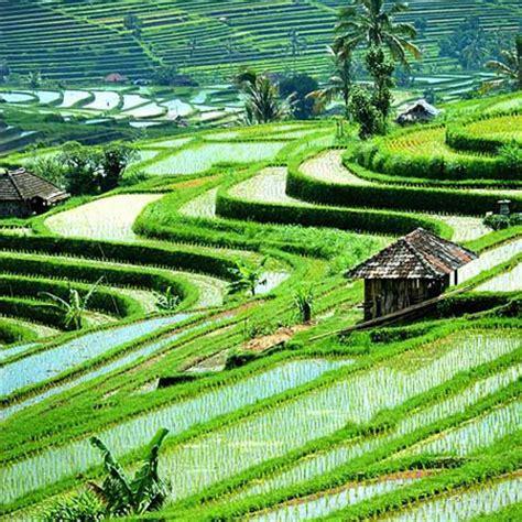 3d Wallpaper 50924881 Terrace Rice Fields Bali bali ubud villa villa chempaka about ubud