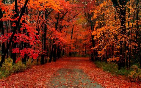 fall trees wallpaper  images