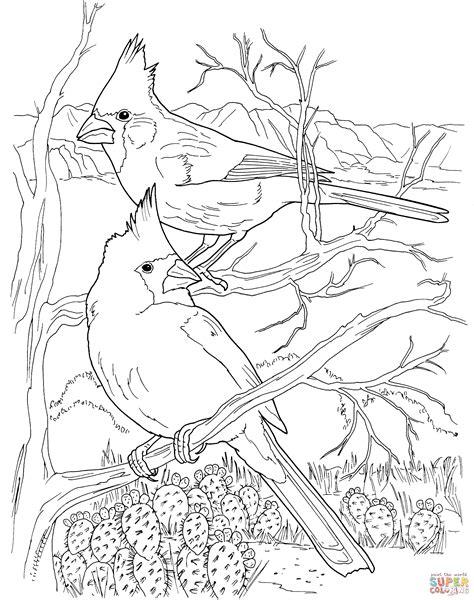 winter cardinal coloring page desert cardinals coloring online