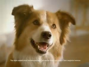 sounds only dogs can hear pet food brand makes tv commercial only dogs can hear adweek