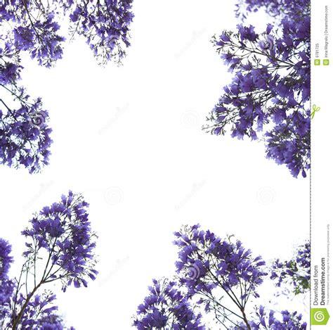 Anting Flower Petals Violet Soft Purple violet flowers frame royalty free stock photo image 9781725