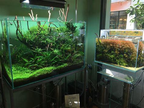 Jual Lu Hias Murah Di Surabaya harga aquarium ikan hias surabaya denah rumah