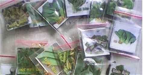 Benih Terong Aura griya hidroponikku benih sayuran harga 3ribu