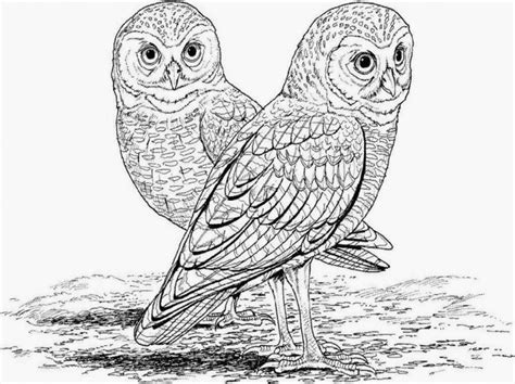 realistic owl coloring page free realistic owl online coloring page for adults