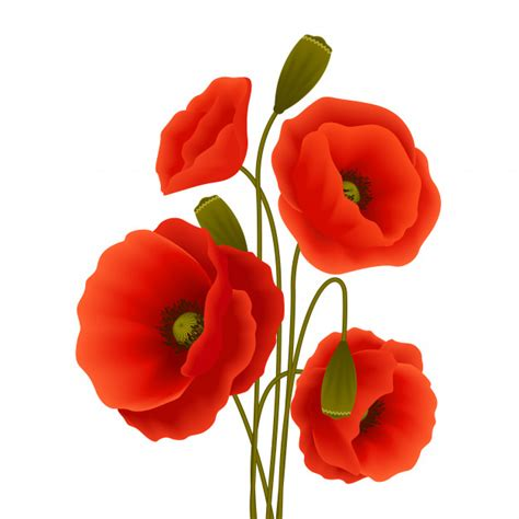 poppy vectors photos and psd files free download