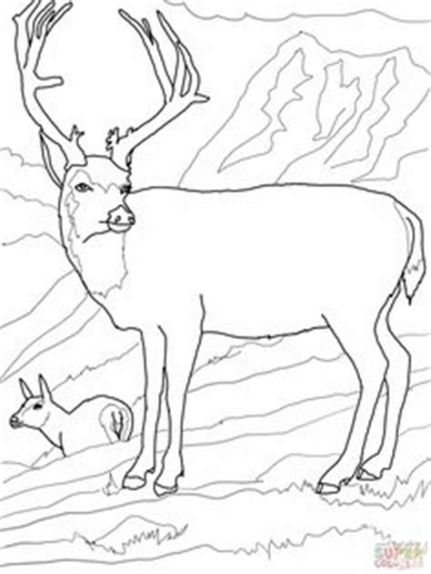 deer family coloring page coloring pages on pinterest mule deer rocky mountains